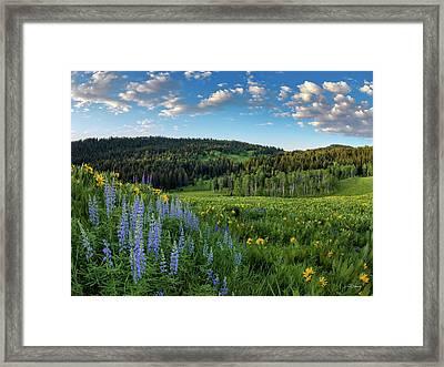 Morning Meadow Framed Print