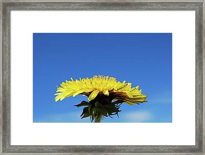 Morning Meditation Framed Print