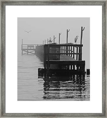 Framed Print featuring the photograph Morning Meeting by Joe Jake Pratt