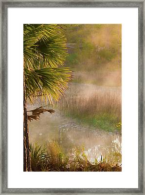 Morning Mist Framed Print by Margaret Palmer