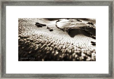 Morning Mushroom Top Framed Print