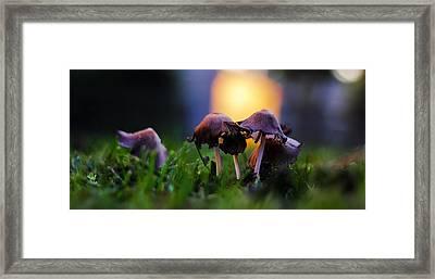 Morning Mushrooms Framed Print