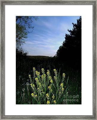 Morning Musturd Framed Print by The Stone Age
