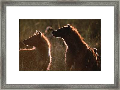 Morning Of The Living Dead Framed Print by Carl Purcell