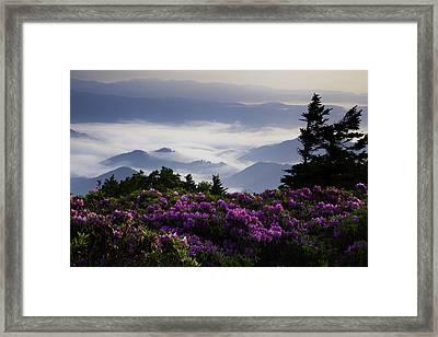 Morning On Grassy Ridge Bald Framed Print by Rob Travis