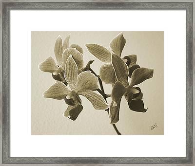 Morning Orchid Framed Print by Ben and Raisa Gertsberg