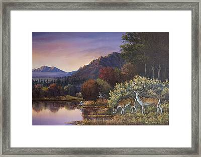 Morning Peace Framed Print by Sean Conlon