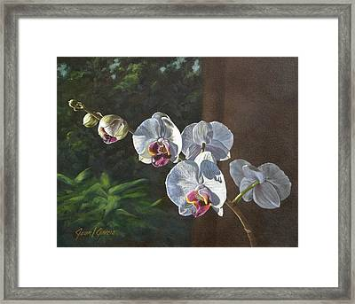 Morning Phaleanopsis Framed Print