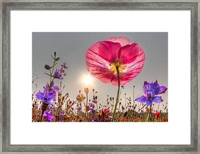 Morning Pink Framed Print by Debra and Dave Vanderlaan