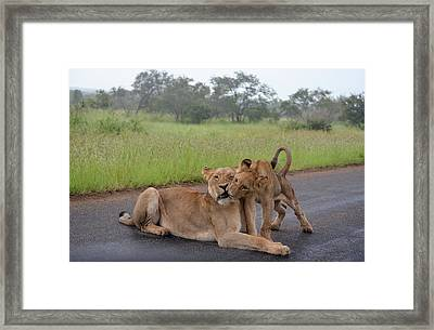 Morning Play Framed Print