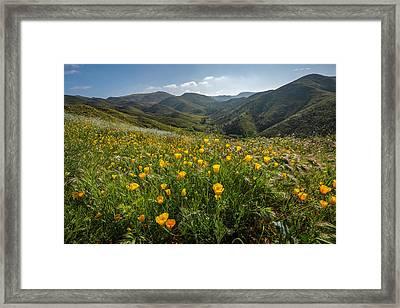 Morning Poppy Hillside Framed Print