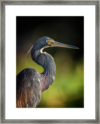 Morning Portrait Framed Print