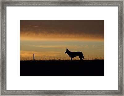 Morning Pose Framed Print by Arlette Seib