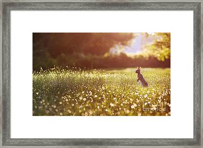 Morning Rabbit Framed Print by Rima Biswas