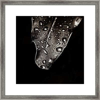 Morning Rain Sepia Toned Framed Print