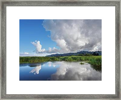 Framed Print featuring the photograph Morning Reflections On A Marsh Pond by Greg Nyquist