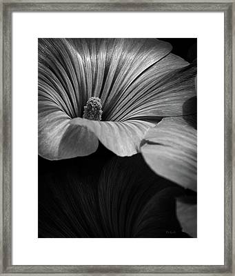 Morning Rose Mallow Framed Print