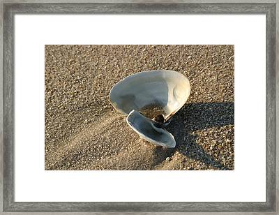 Morning Shadow Framed Print by Mary Haber