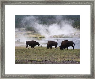 Morning Silence Framed Print by Debbie Hall