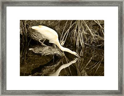 Morning Sip II Framed Print by Jody Lovejoy