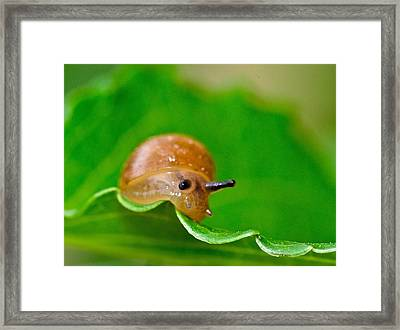 Morning Snail Framed Print