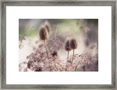 Morning Softness. Wild Grass Framed Print