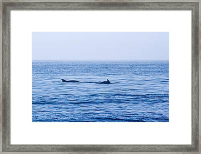 Morning Search For Food Framed Print