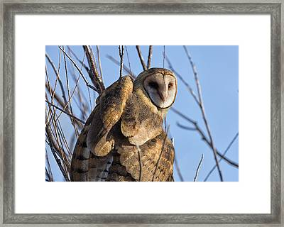 At The Dawning Of The Day Framed Print