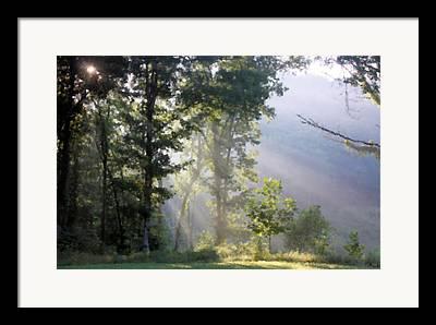 The Trees Mixed Media Framed Prints