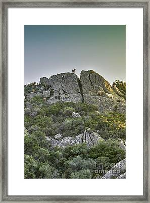 Morning Sun Lit Rocky Hill Greece Framed Print by Jivko Nakev