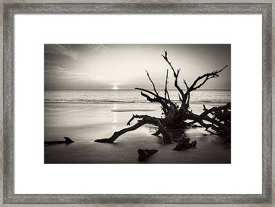Morning Sun On Driftwood Beach In Black And White Framed Print