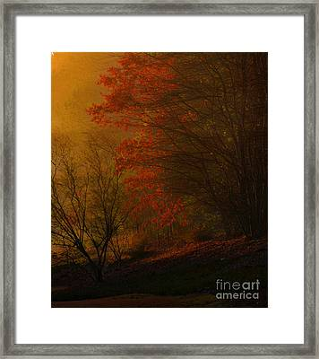 Morning Sunrise With Fog Touching The Tree Tops In Georgia. Framed Print