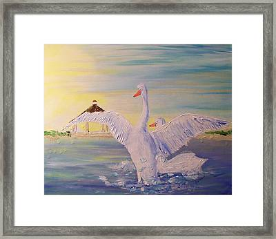 Morning Swans Framed Print by Rich Mason