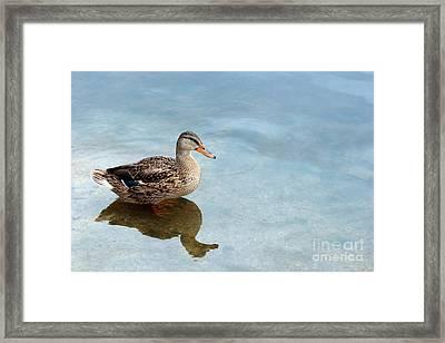 Morning Swim Framed Print by Jeannie Burleson
