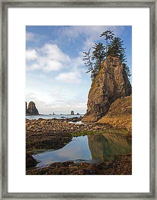 Morning Tidepool Framed Print