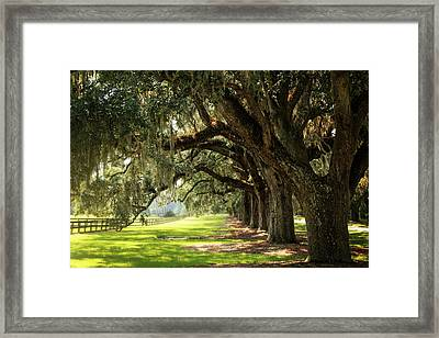 Morning Under The Mossy Oaks Framed Print