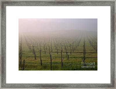 Morning Vineyard Framed Print
