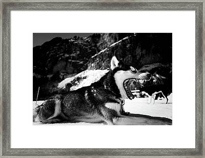 Morning Wakeup Framed Print by Unsplash