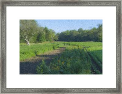 Morning Walk At Langwater Farm Framed Print