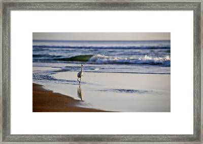 Morning Walk At Ormond Beach Framed Print