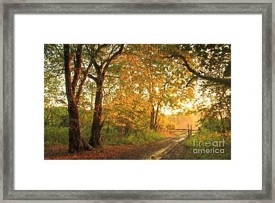 Morning Warm Light Framed Print by Veikko Suikkanen