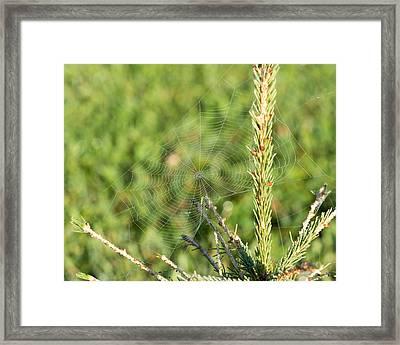 Morning Web #2 Framed Print