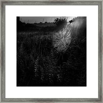 Morning Web Framed Print