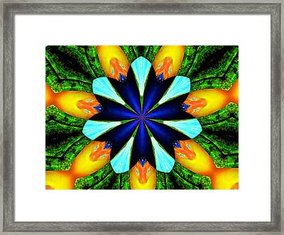 Morningglory Framed Print by Maxwell Kerr