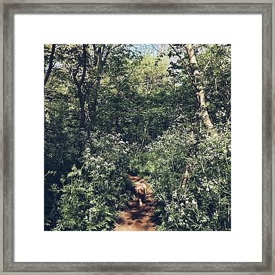 #morningwalk #dogwalk #cockapoo #woods Framed Print