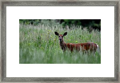 Morninng Deer Framed Print