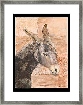 Moroccan Donkey Framed Print by Laura Vazquez