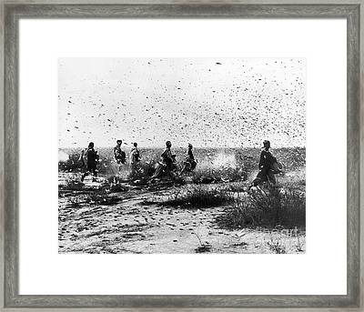 Morocco: Locusts, 1954 Framed Print by Granger