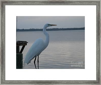 Morphed Heron Framed Print by Tommy Baker
