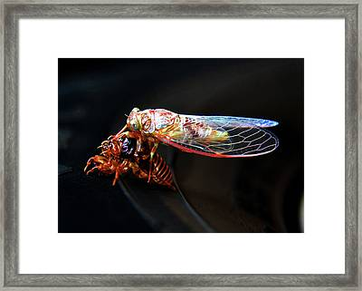 Morphing Framed Print by David Lee Thompson